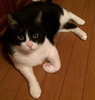 飼い猫:豆助くん